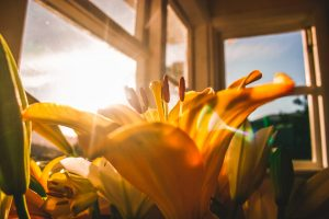 gele bloemen bij raam